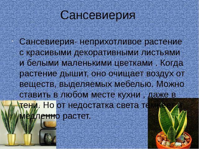 Сансевиерия Сансевиерия- неприхотливое растение с красивыми декоративными лис...