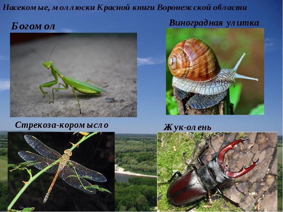 современной испании животные и насекомые из красной книги россии товары представленные каталоге
