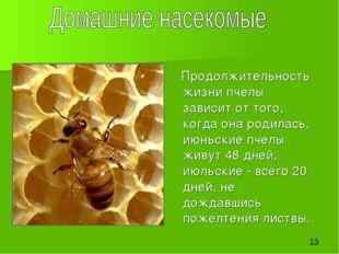 Продолжительность жизни пчелы зависит от того, когда она родилась, июньские