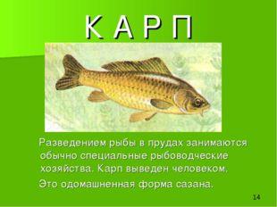 К А Р П Разведением рыбы в прудах занимаются обычно специальные рыбоводческие