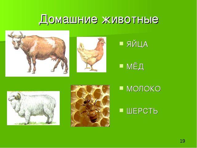 Домашние животные ЯЙЦА МЁД МОЛОКО ШЕРСТЬ