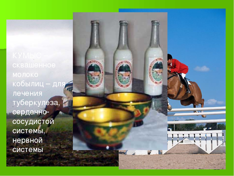Конный спорт КУМЫС – сквашенное молоко кобылиц – для лечения туберкулеза, сер...