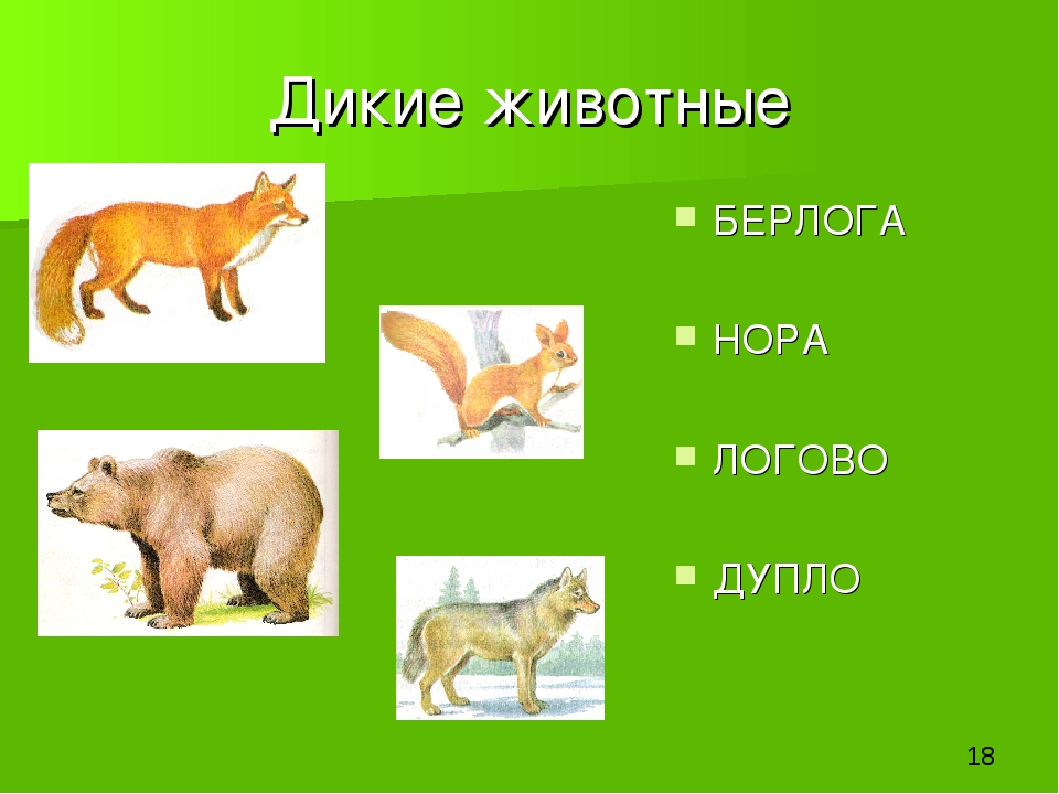 Дикие животные БЕРЛОГА НОРА ЛОГОВО ДУПЛО