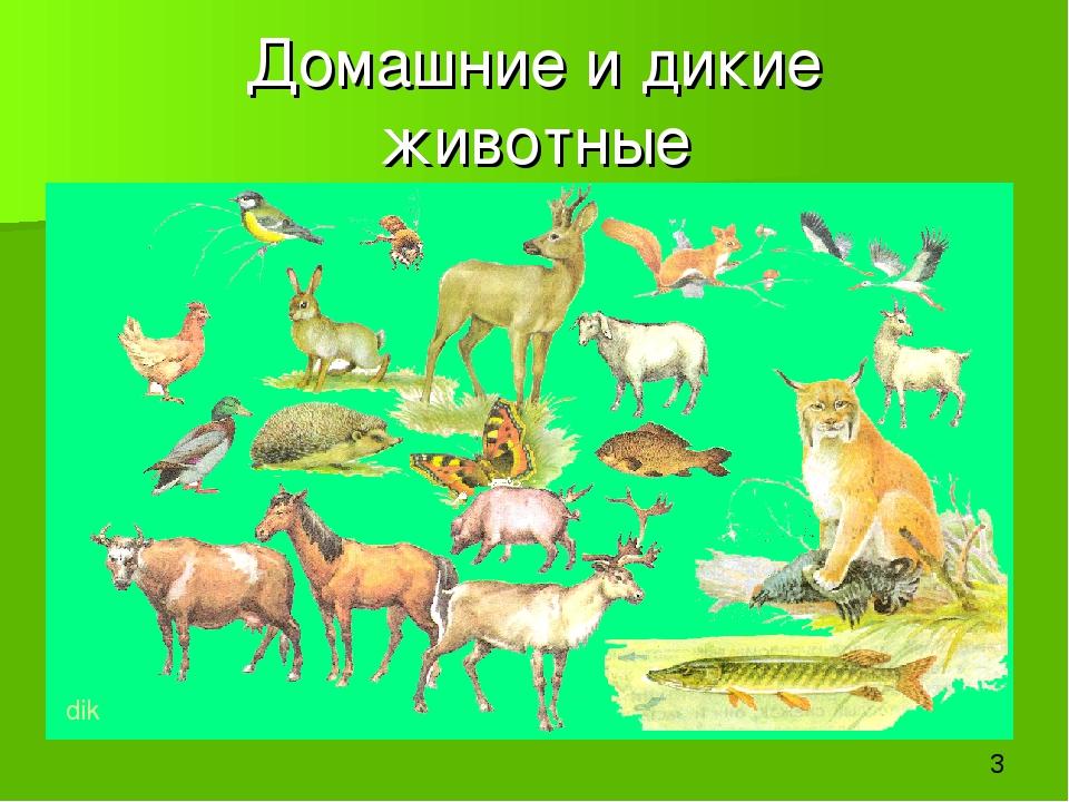 Домашние и дикие животные dik