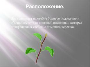 Расположение. Лист занимает на стебле боковое положение и обычно состоит из л