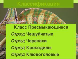 Классификация Класс Пресмыкающиеся Отряд Чешуйчатые Отряд Черепахи Отряд Крок