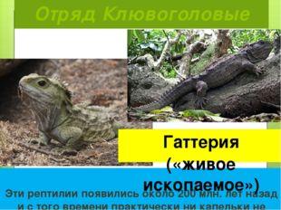 Отряд Клювоголовые  Эти рептилии появились около 200 млн. лет назад и с того