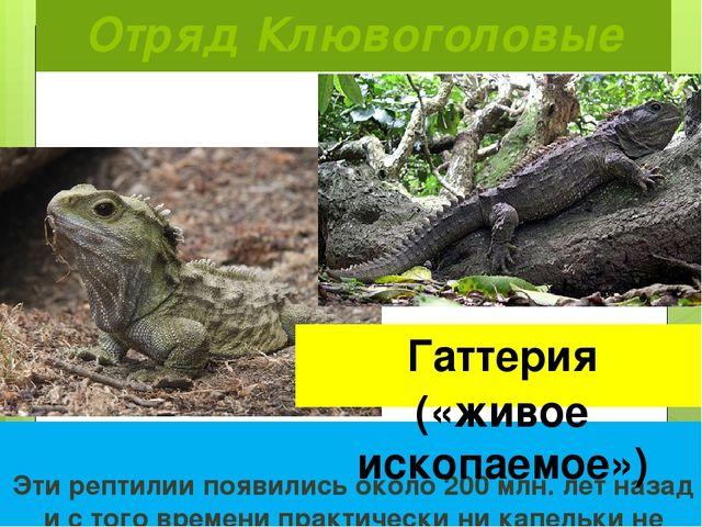Отряд Клювоголовые  Эти рептилии появились около 200 млн. лет назад и с того...