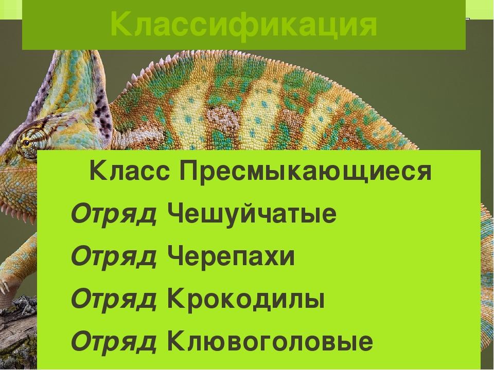 Классификация Класс Пресмыкающиеся Отряд Чешуйчатые Отряд Черепахи Отряд Крок...