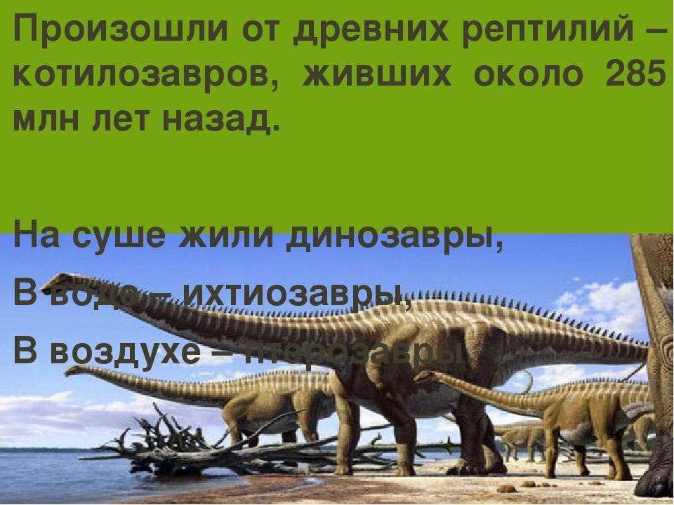 Произошли от древних рептилий – котилозавров, живших около 285 млн лет назад....