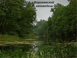 Воронежский заповедник Воронежский заповедник