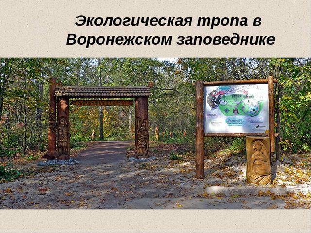 Экологическая тропа в Воронежском заповеднике