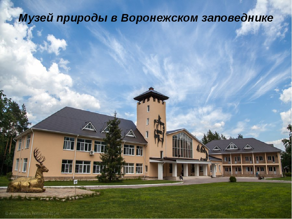 Музей природы в Воронежском заповеднике