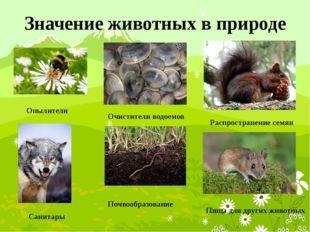 Значение животных в природе Опылители Санитары Очистители водоемов Почвообраз