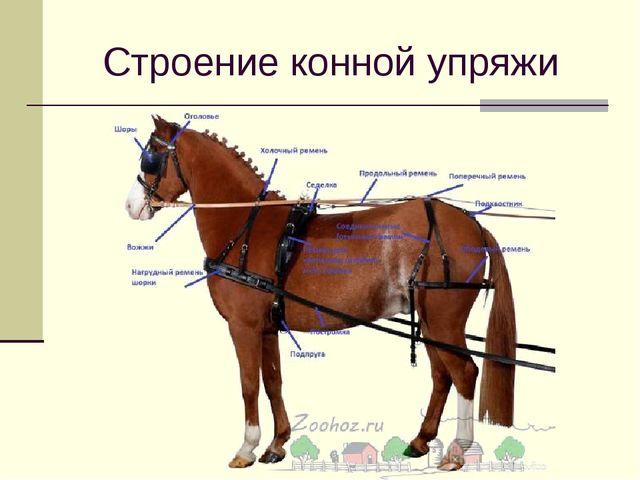 Строение конной упряжи