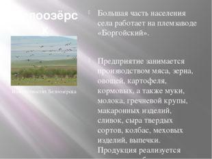 Белоозёрск (Бурятия) Большая часть населения села работает на племзаводе «Бор