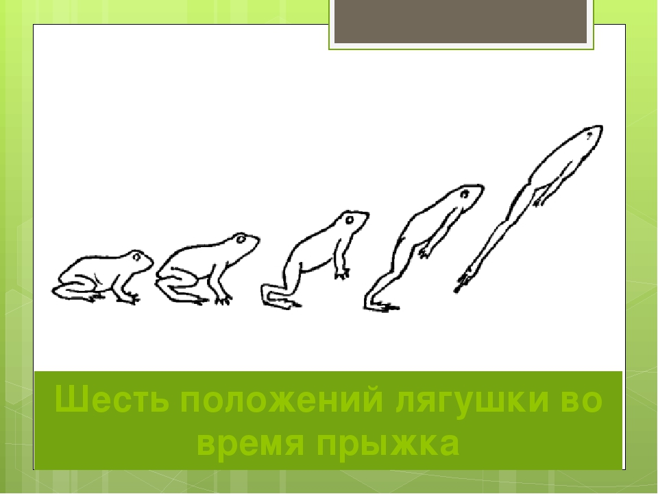 Шесть положений лягушки во время прыжка