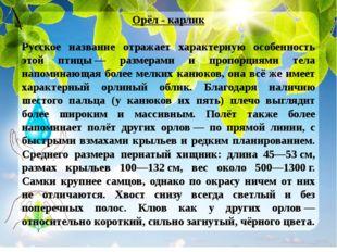 Орёл - карлик Русское название отражает характерную особенность этой птицы—