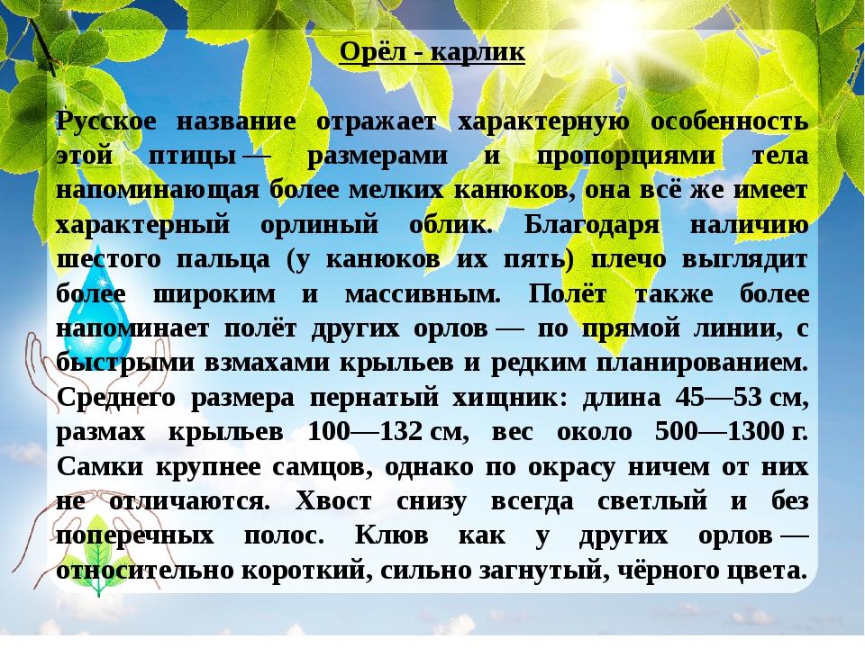 Орёл - карлик Русское название отражает характерную особенность этой птицы—...