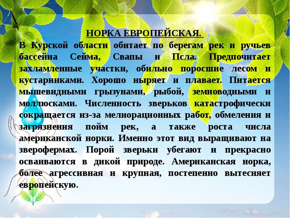 НОРКА ЕВРОПЕЙСКАЯ. В Курской области обитает по берегам рек и ручьев бассейна...