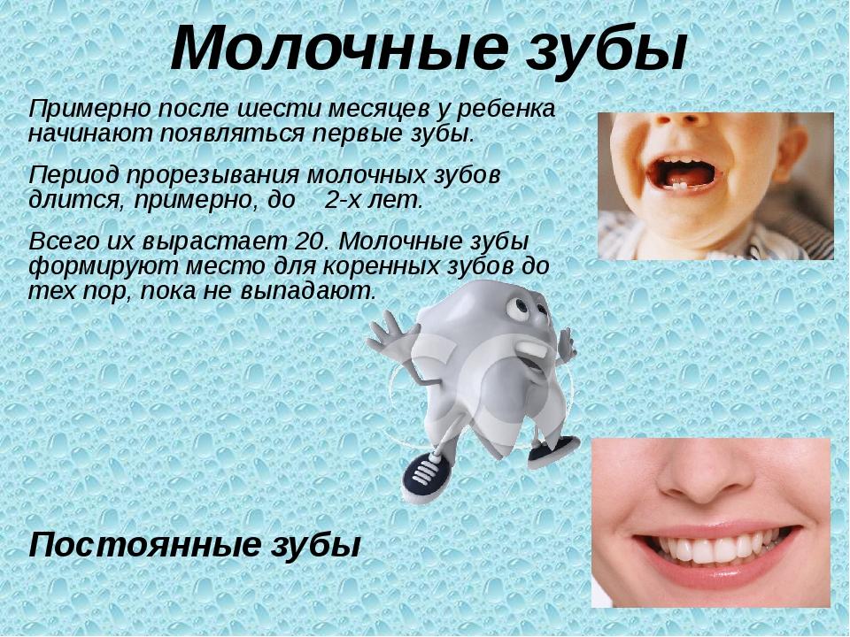 Как формируются постоянные зубы у ребенка