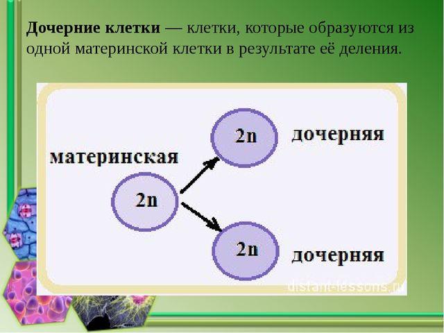 Дочерние клетки — клетки, которые образуются из одной материнской клетки в ре...