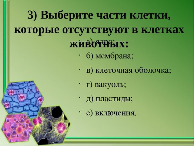 3) Выберите части клетки, которые отсутствуют в клетках животных: а) ядро; б)...