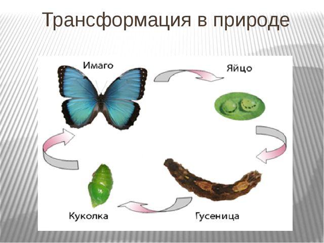 Трансформация в природе