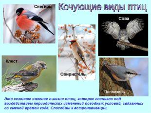 Это сезонное явление в жизни птиц, которое возникло под воздействием периодич