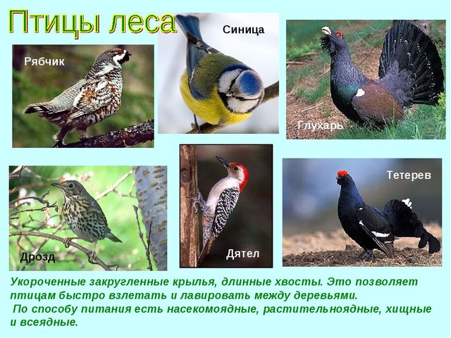 Укороченные закругленные крылья, длинные хвосты. Это позволяет птицам быстро...