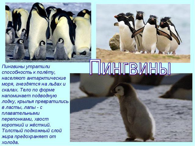 Пингвины утратили способность к полёту, населяют антарктические моря, гнездят...