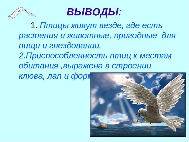 1. Птицы живут везде, где есть растения и животные, пригодные для пищи и г...