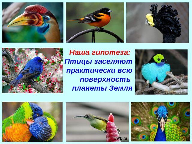 Наша гипотеза: Птицы заселяют практически всю поверхность планеты Земля