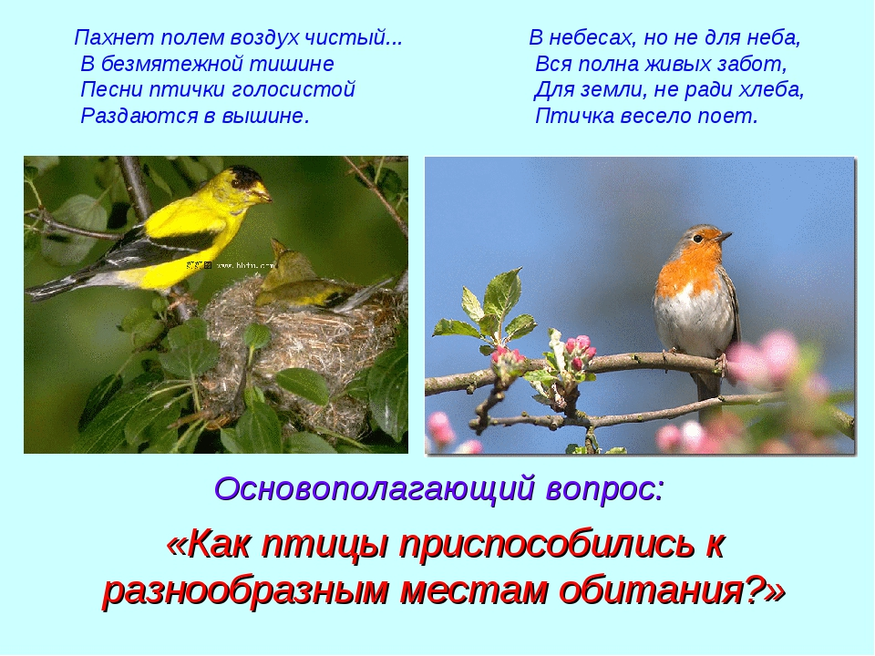 Пахнет полем воздух чистый... В безмятежной тишине Песни птички голосистой Ра...