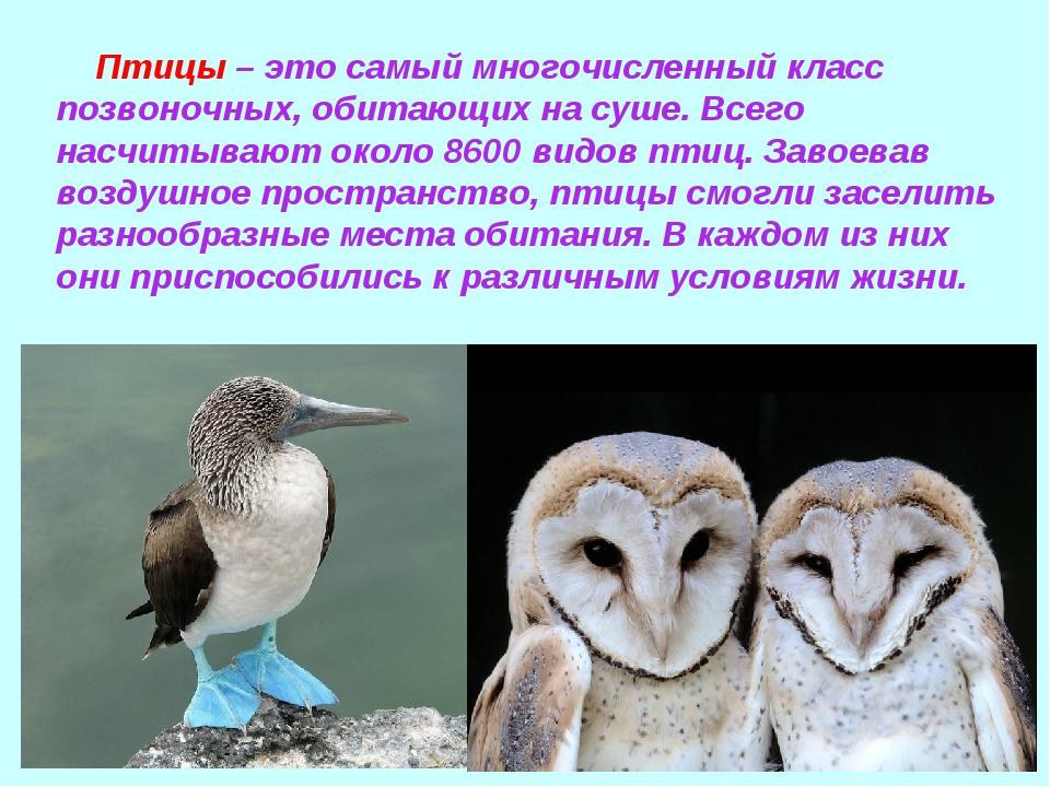 Птицы – это самый многочисленный класс позвоночных, обитающих на суше. Всего...