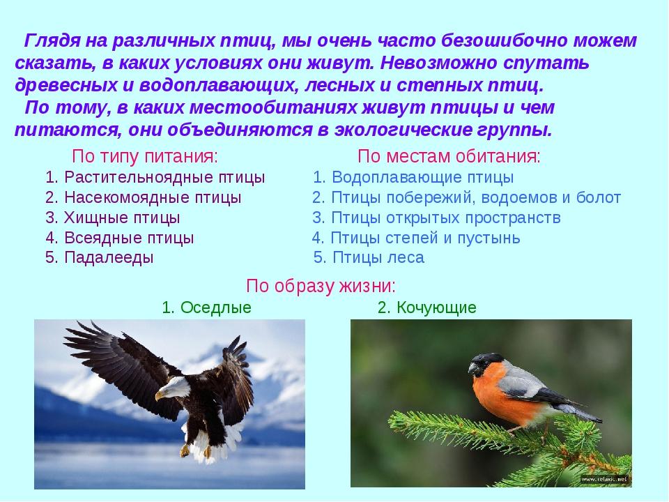 Глядя на различных птиц, мы очень часто безошибочно можем сказать, в каких у...