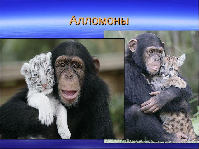 Алломоны Когда человек боится, выделяется адреналин, Это знают собаки и с лае...