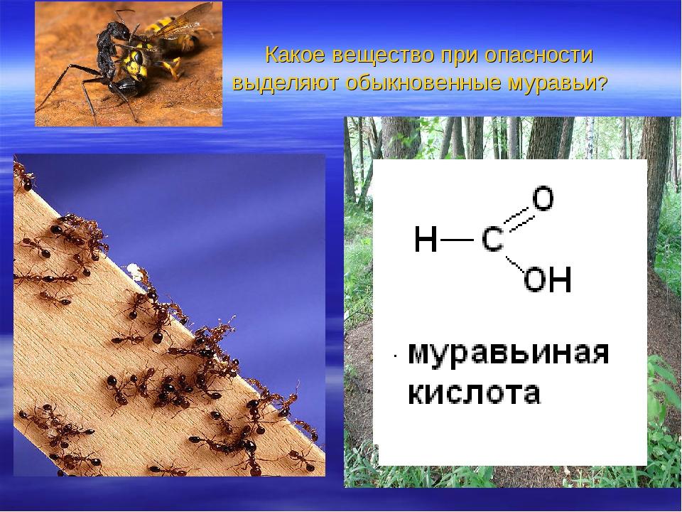 Какое вещество при опасности выделяют обыкновенные муравьи? Дано: W( C )=26,...