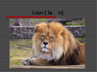 Lion [ˈlaɪən]