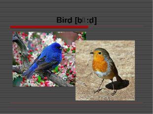 Bird [bɜ:d]