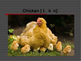 Chicken [ˈtʃɪkɪn]