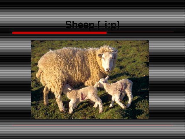 Sheep [ʃi:p]
