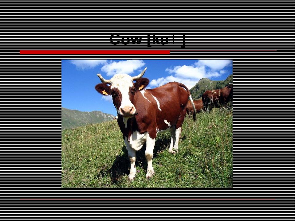 Cow [kaʊ]