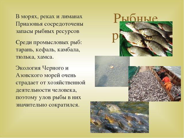 Рыбные ресурсы В морях, реках и лиманах Приазовья сосредоточены запасы рыбных...