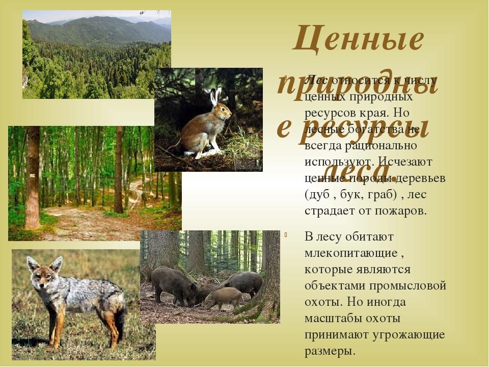 Ценные природные ресурсы леса. Лес относится к числу ценных природных ресурсо...