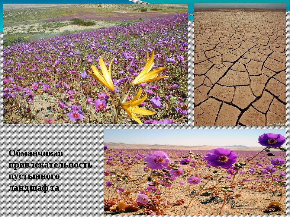 Обманчивая привлекательность пустынного ландшафта