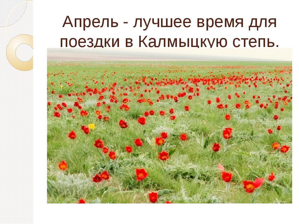 Апрель - лучшее время для поездки в Калмыцкую степь.