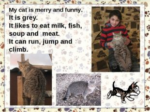 My cat is merry and funny. It is grey. It likes to eat milk, fish, soup and m