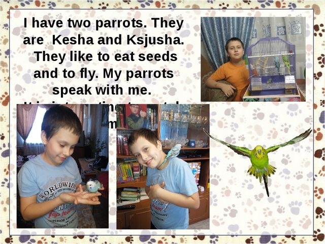 I have two parrots. They are Kesha and Ksjusha. They like to eat seeds and to...