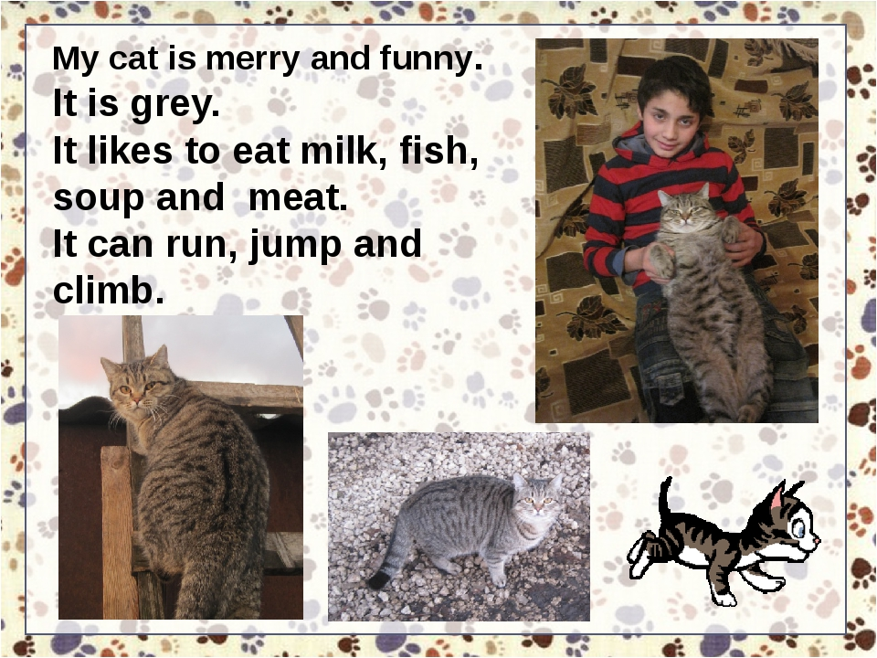 My cat is merry and funny. It is grey. It likes to eat milk, fish, soup and m...